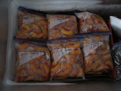 Bags of peaches in a freezer